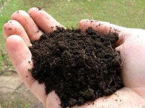 Состав и свойства почвы