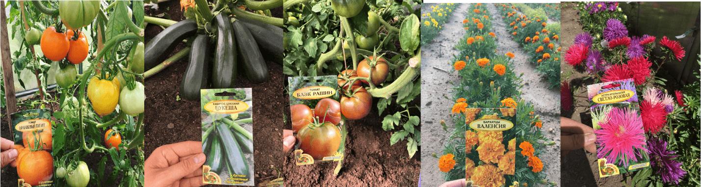 Семена для выращивания овощей